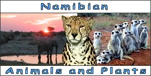 Namibian Animals